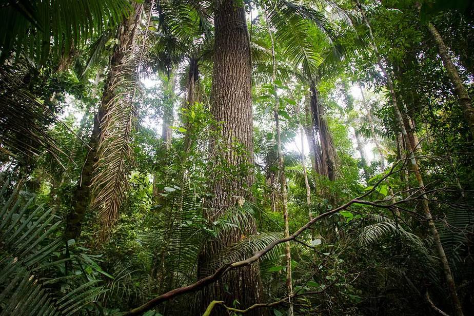 """Temporada de """"queimadas"""" en la Amazonia en el ojo del Huracán"""
