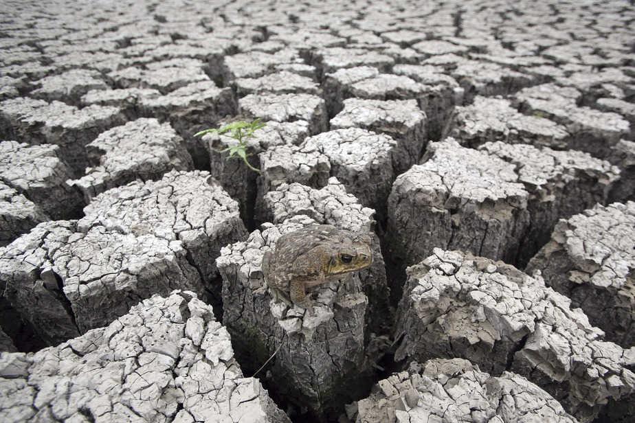 IMagen de la sequía que asola a gran parte del planeta. FOTO: Reuters