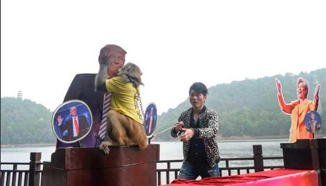 Mono Goda, elecciones EEUU