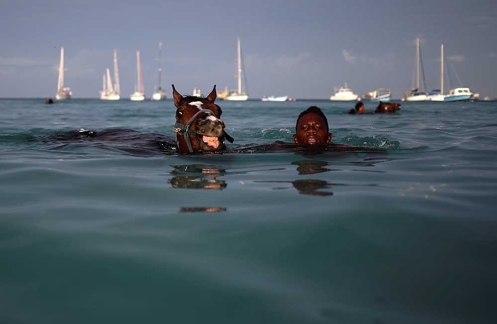Caballos en el mar