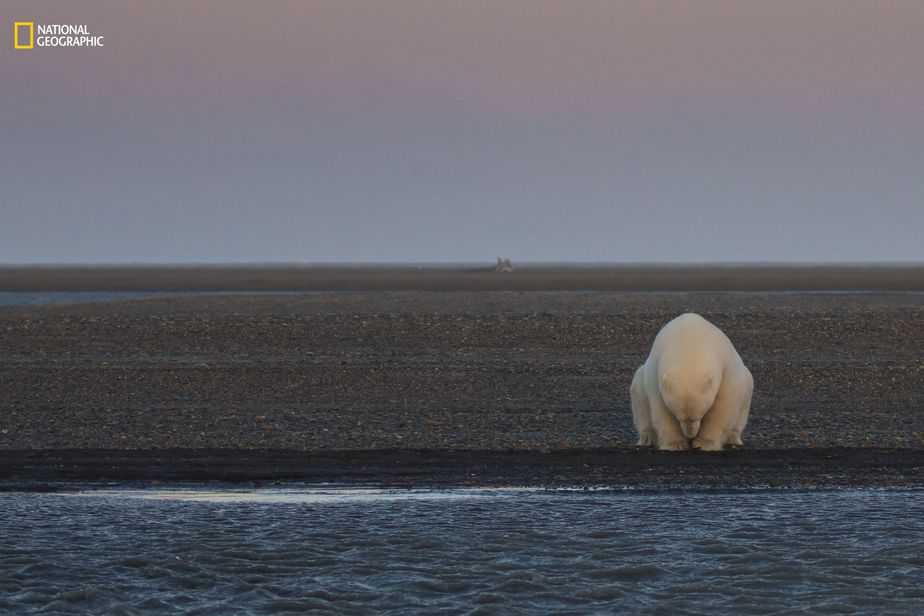 En ningún lugar para vagar. (Patty Waymire / 2016 National Geographic)
