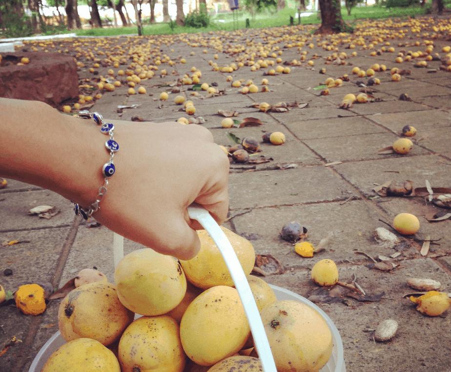 Mangos Paraguay