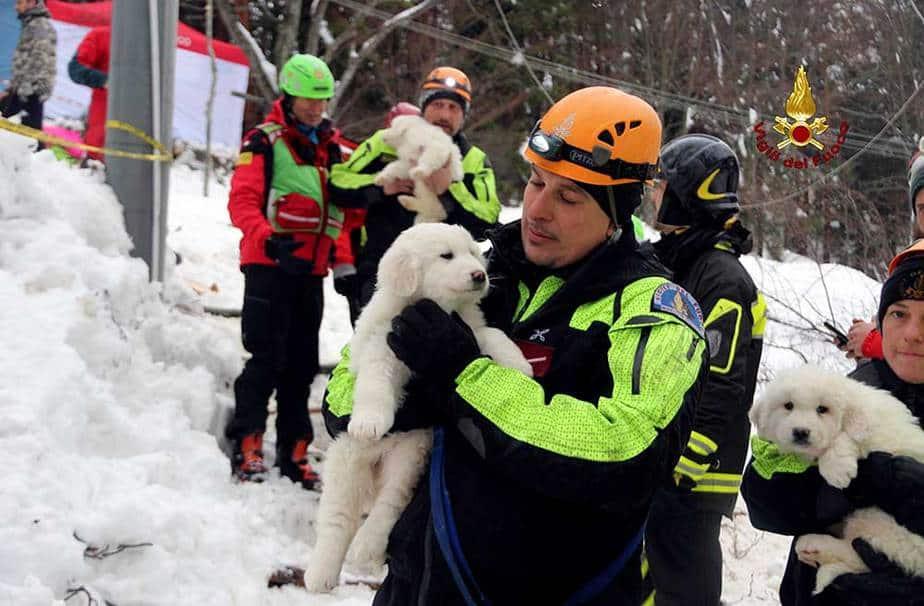 Cachorros rescatados en Italia