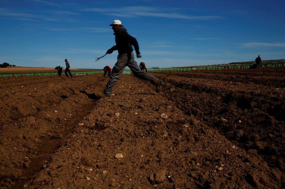 Trabajadores del campo. FO>TO. Reuters