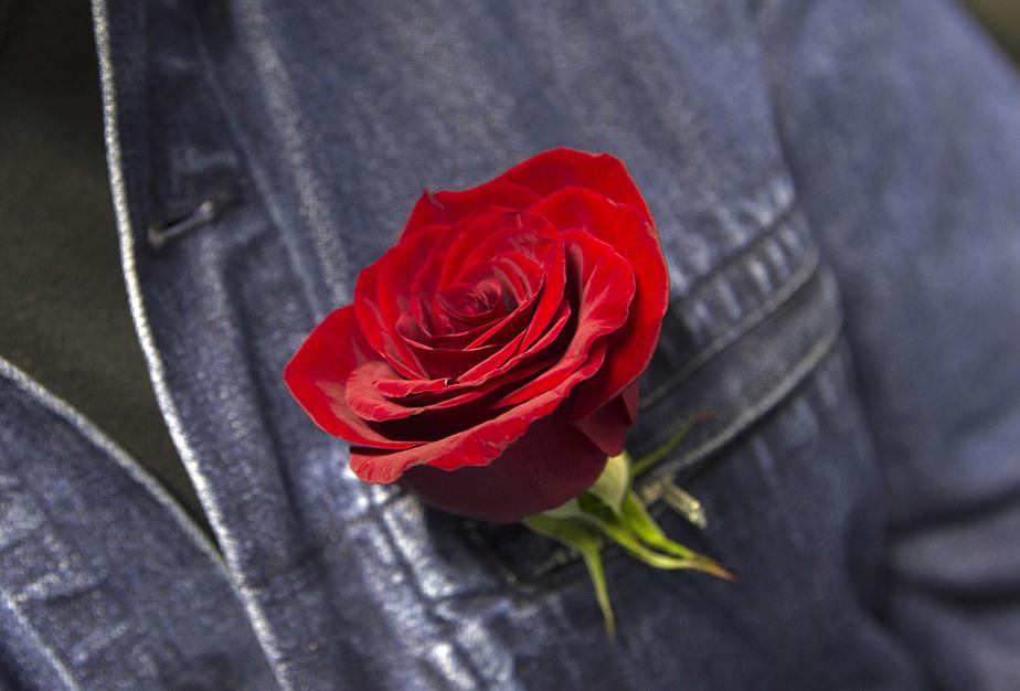 Simpatizante del PSOE con una rosa, símbolo del partido. FOTO: Reuters