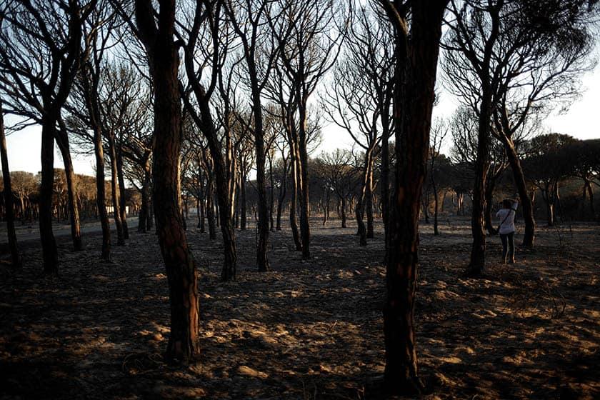 Incendio de Doñana. FOTO: Reuters