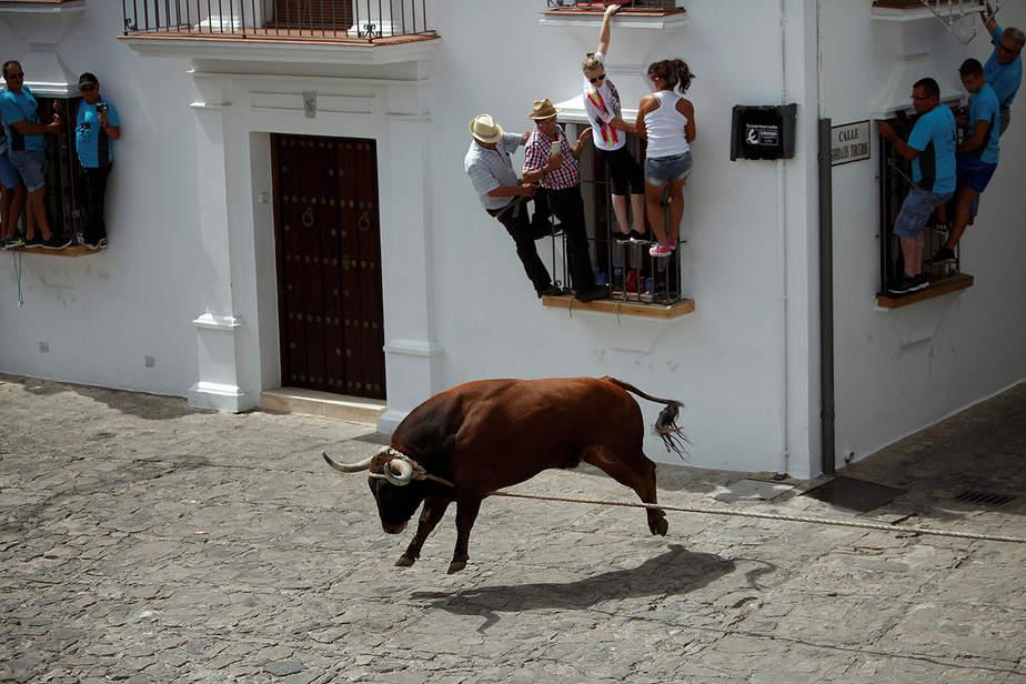 """La gente se aferra a las ventanas para evitar un toro, llamado Trompetero, durante el festival """"Toro de Cuerda"""" en Grazalema, España, 17 de julio de 2017. Se permite que corran tres toros atrapados por una cuerda por las calles de la ciudad."""
