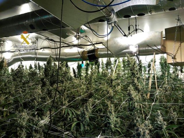 Marihuana Hay 3 personas detenidas y se han incautado 1.300 plantas de marihuana, 28 kilos de hachís y 27 de cogollos de marihuana listos para su venta