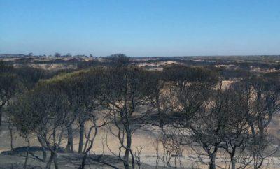 Incendios en el parque de Doñana.