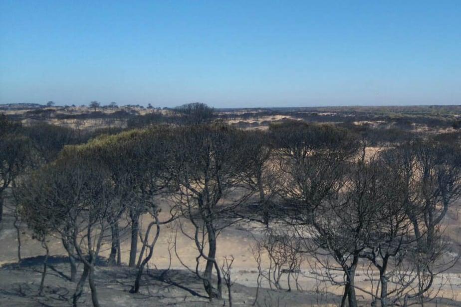 Teide y Doñana, los parques de España más amenazados