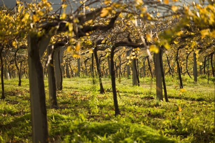 Vermut INNTERWINARGAL es un proyecto I+D consorciado que tiene como objetivo principal la elaboración de un vino aromatizado (vermut), con viníferas tradicionales y con hierbas aromáticas gallegas. El proyecto cuenta con un presupuesto global de 1,1 millones de euros, está cofinanciado por el CDTI con fondos FEDER de la Unión Europea-Programa Innterconecta 2015-y se desarrollará hasta diciembre de 2017.