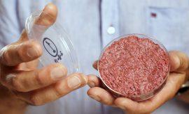 Carne limpia: de la cápsula de petri a la cena
