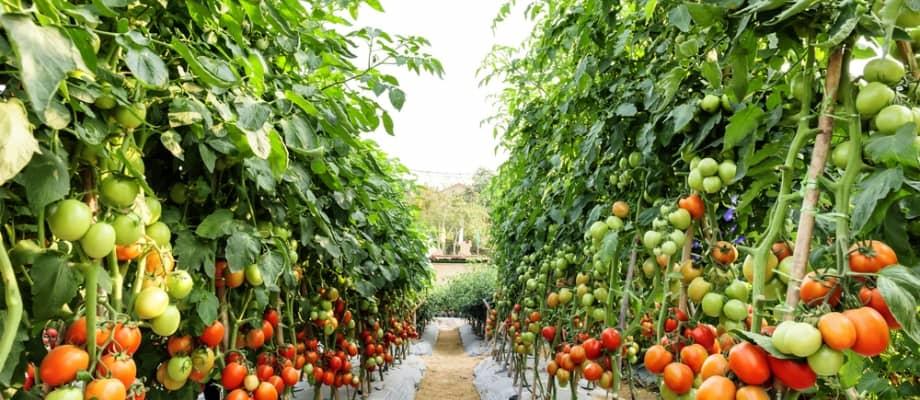 España es hoy el exportador más importante de frutas y verduras frescas a nivel mundial