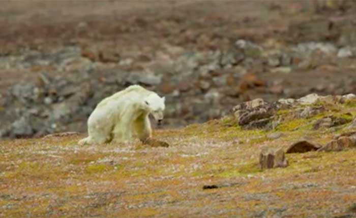 cómo afecta el cambio climático a los animales