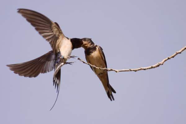 """Aves raras. Los últimos temporales atraen """"aves raras"""" a España"""