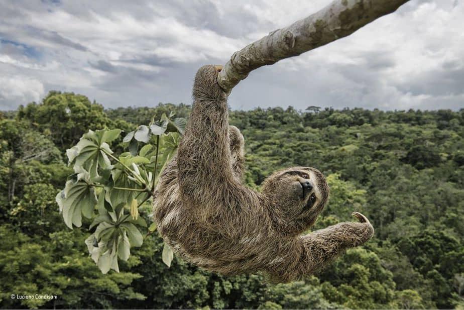 Mejor Foto de Vida Silvestre 2018
