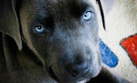 Europa prohibe cortar la cola a los perros o las orejas mediante decreto