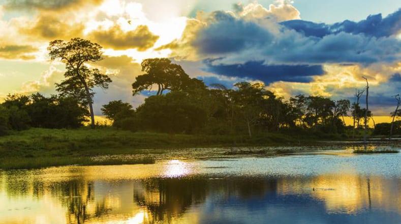 La selva de Colombia ahora tiene los mismos derechos de un ser humano