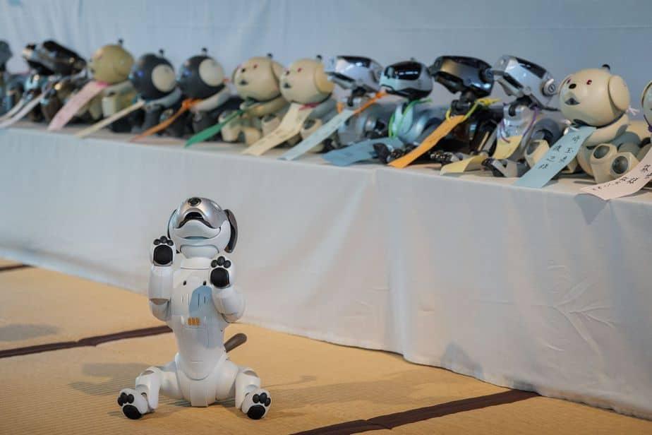 funeral de perros robots