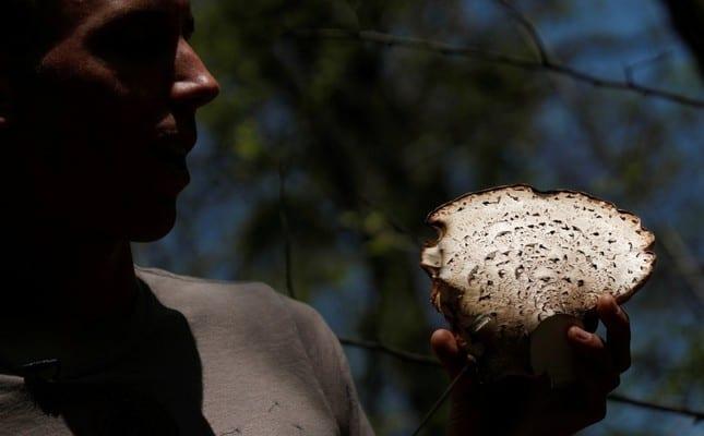 intoxicación con hongos en Irán