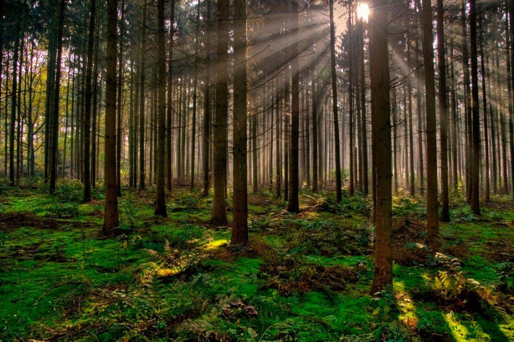 bosques europeos