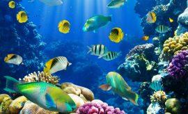 Google y ONU Medio Ambiente crean mecanismo para monitorear ecosistemas
