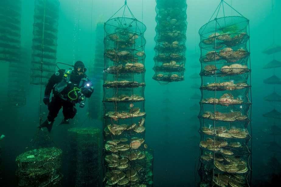 Consumo mundial de pescado está en peligro, dice la ONU