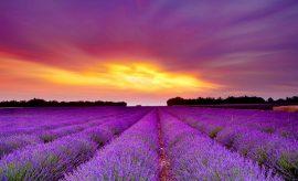 Ruta del perfume en Francia