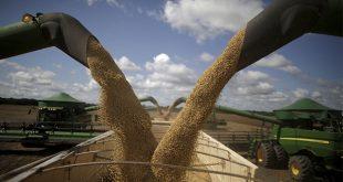 El cultivo de la soja ha puesto en peligro una vasta sabana tropical que alberga al cinco por ciento de las especies del planeta (Reuters)