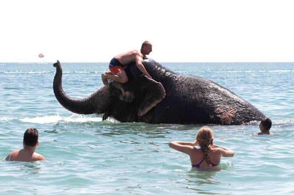 Un elefante de circo disfrutando de un baño en el mar Negro