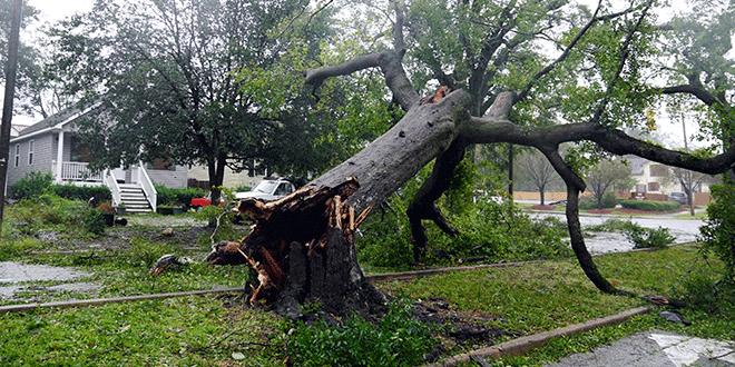Un árbol derribado mientras el huracán Florence llega a tierra en Wilmington, EE. UU., 14 de septiembre de 2018. REUTERS / Carlo Allegri