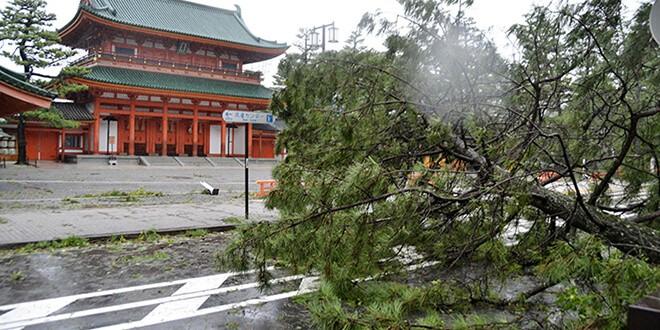 Un árbol dañado por el tifón Jebi se ve frente al Santuario Heian en Kyoto, en esta foto tomada por Kyodo el 4 de septiembre de 2018. Crédito obligatorio Kyodo / a través de REUTERS