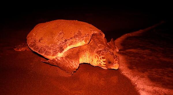 June Haimoff lucha a los 95 años por preservar las tortugas marinas/Reuters