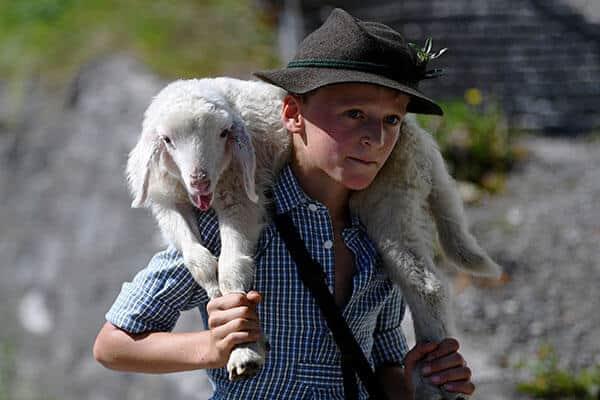 """Una de las fotos más impactante del día es un niño llevando una pequeña oveja desde sus pastos de verano en las montañas hasta el valle y a través de la ciudad de Mittenwald durante el tradicional """"Almabtrieb"""" en Mittenwald."""