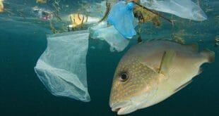 Coca-Cola, PepsiCo y Nestlé las compañías que más residuos plásticos producen