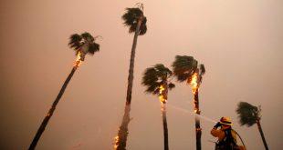 Un bombero rocía palmeras en Malibú en medio del incendio Woolsey, en California, el 10 de noviembre de 2018. REUTERS/Eric Thayer