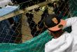 ACNUR y la OIM lanzan Plan de Emergencia para migrantes venezolanos
