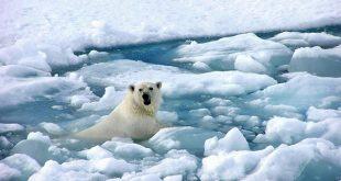 científicos advierten que es necesario hacer algo por la Tierra o el calentamiento global producirá daños irreversibles