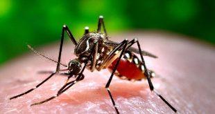 El virus del dengue es una infección transmitida por mosquitos que generalmente ocurre en las regiones tropicales y subtropicales del mundo. Foto: James Gathany