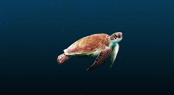 Contaminación-por-plásticos