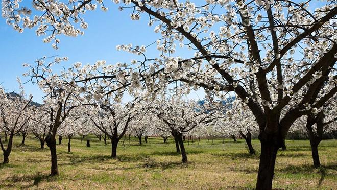 La primavera no le dará la vuelta al invierno seco