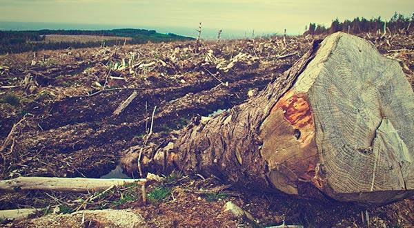 Deforestando le robamos