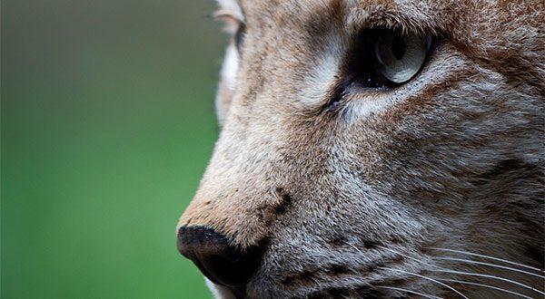 Un millón de especies en peligro de extinción. La vida se acaba