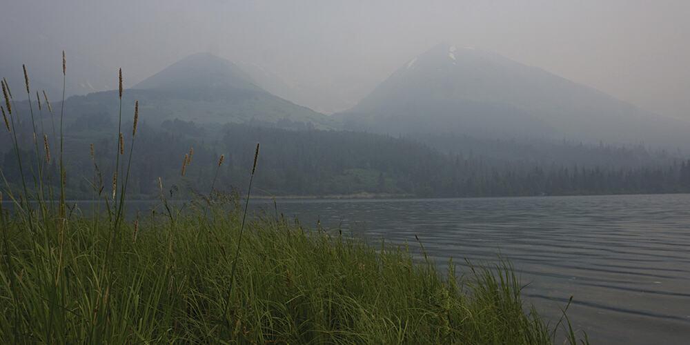 Donald Trump autorizará la explotación del mayor bosque nacional de Estados Unidos