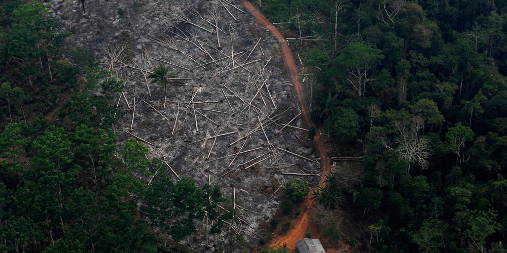Las selvas brasileras se encuentran en peligro por terrible deforestación.