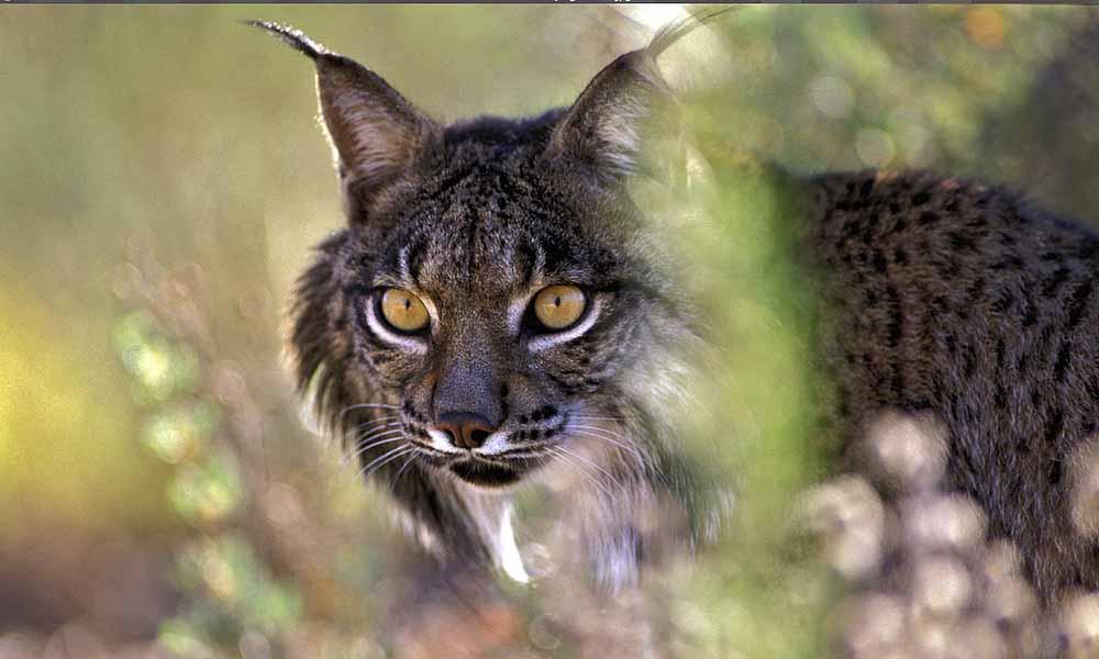 WWF afirma que el 60%de los ejemplares muertos son causados por atropellos