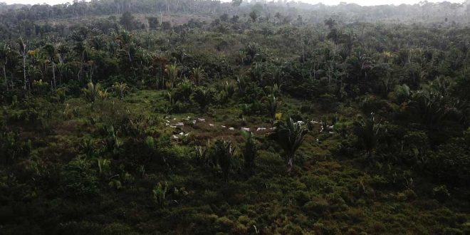 Restauración de bosques pierde la batalla frente a deforestación