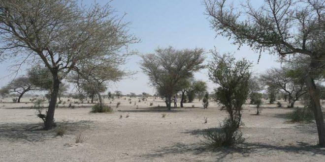 La Gran Muralla Verde del Sahel contra la desertificación y el cambio climático