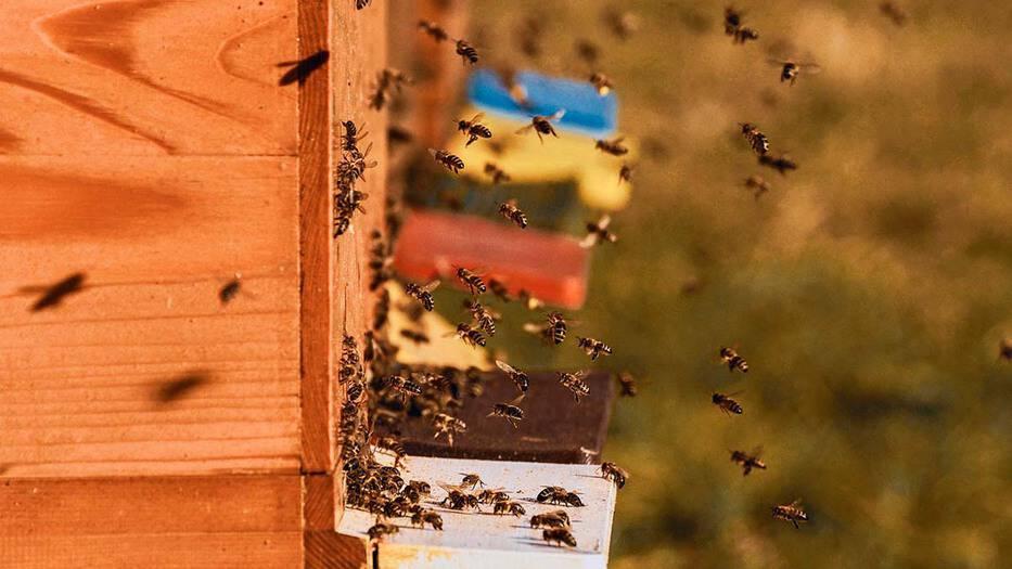 ¿Qué pasaría si desaparecen las abejas?