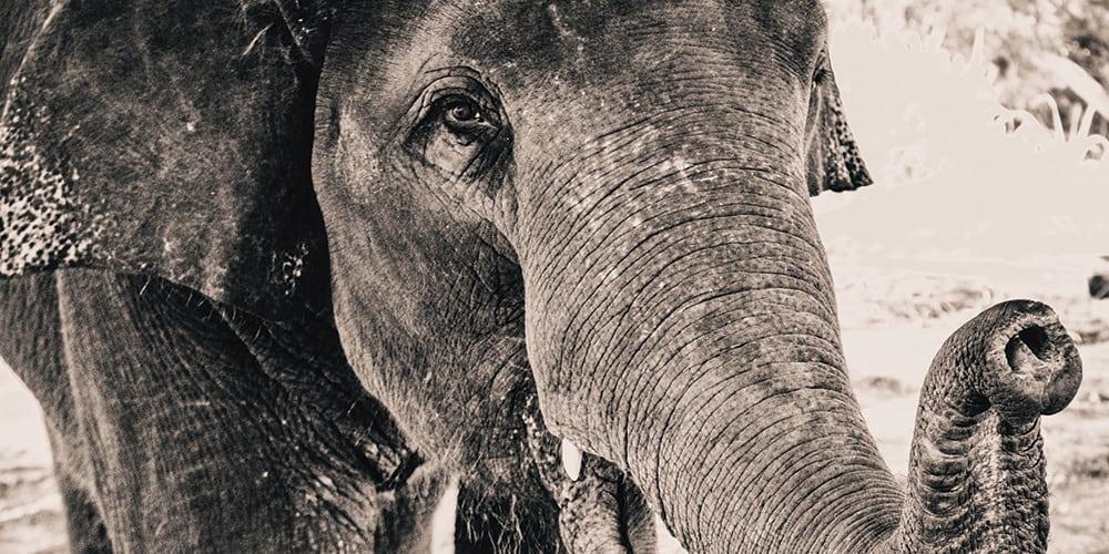 Nos enfrentamos a la sexta extinción masiva de seres vivos